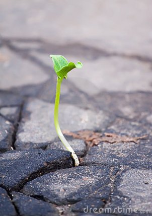 growing-green-sprout-asphalt-17191363