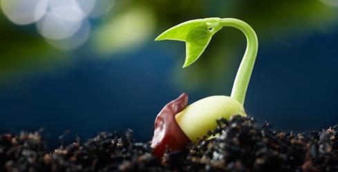 Seed_germination